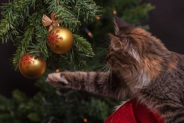 kočka u vánočního stromu.jpg